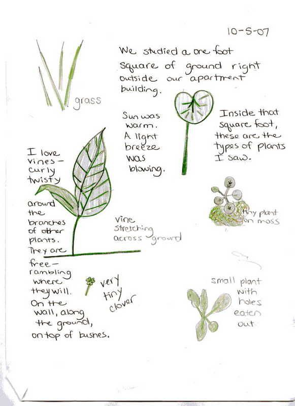 A page full of notes and sketches of plants from a naturalist's journal