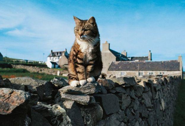 Кот в Британии