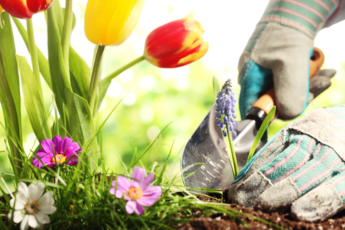National Gardening Exercise Day: June 6th - Seva Call