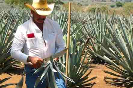 Take part in award-winning tequila tours with Experience Tequila