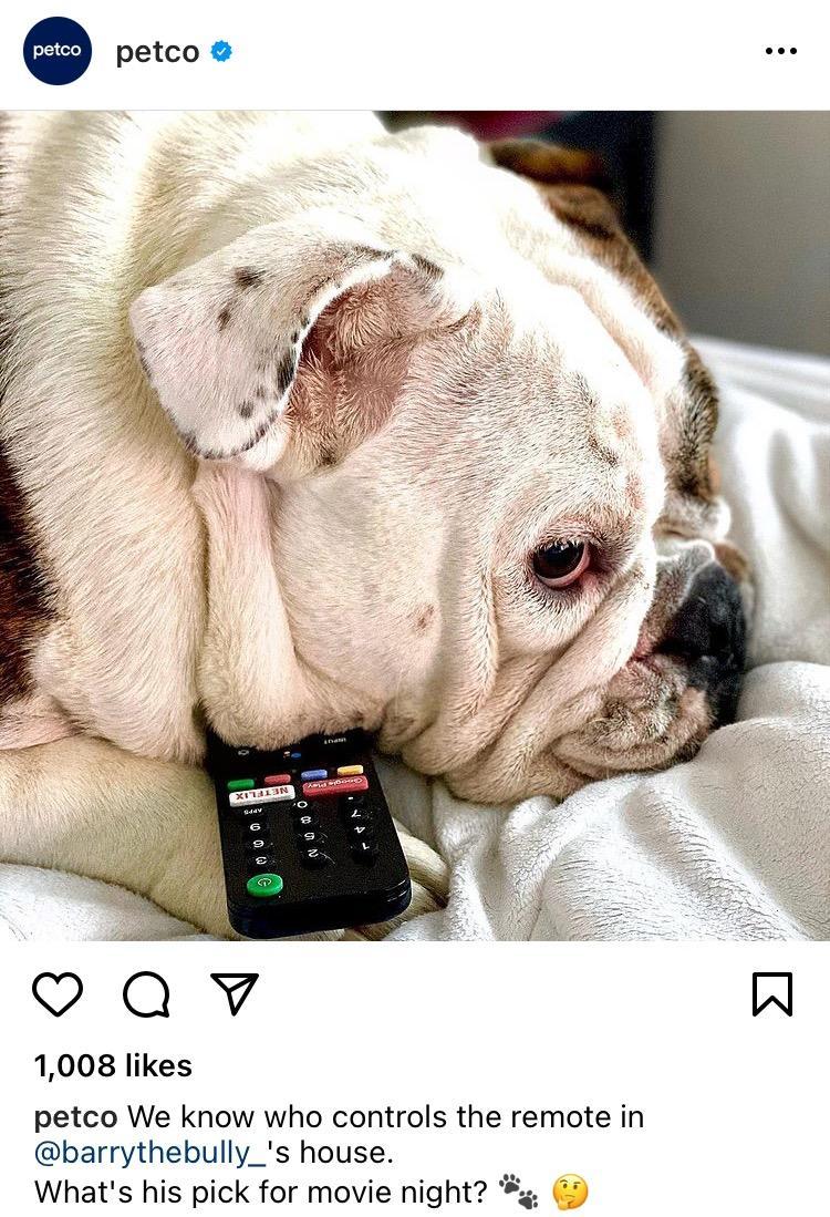 Petco's instagram post