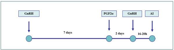 Programa Ovsynch: esquema de sincronización del estro basado en la manipulación del crecimiento folicular y el momento de la ovulación. Por lo general, solo se realiza una IA a tiempo fijo porque la ovulación se sincroniza en un período de tiempo corto al tiempo de la segunda inyección de la GnRH.