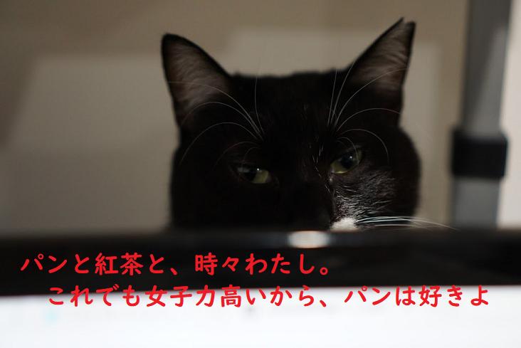 関西にある人気パン屋さん!大阪・梅田の猫好きにおすすめのお店