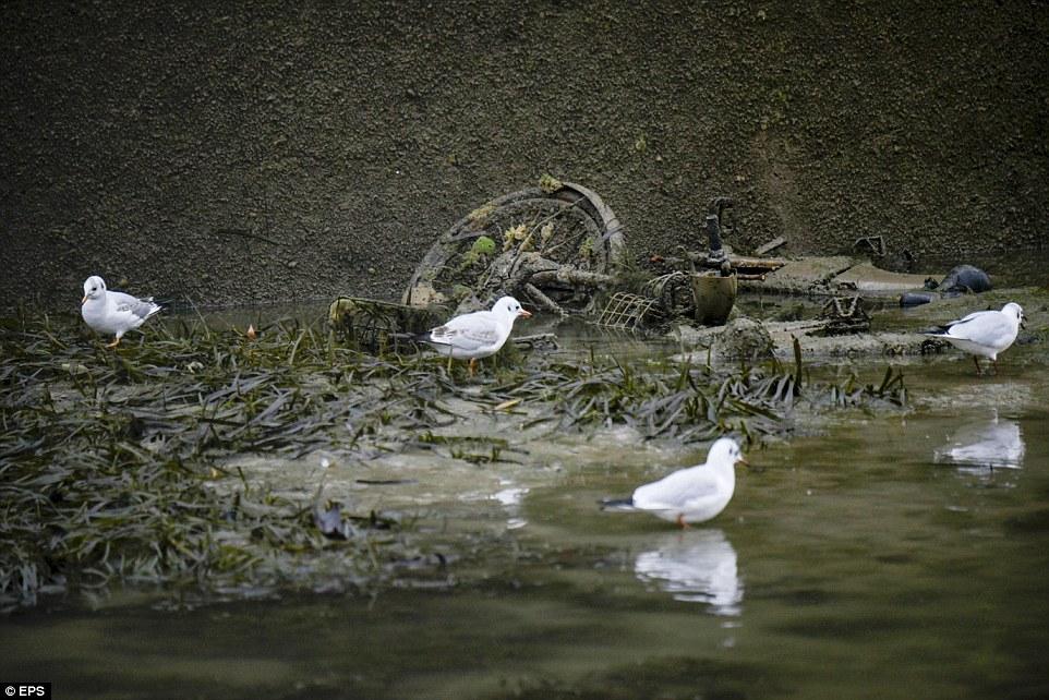 午餐時間:海鷗尋找新出現的碎片,希望在廢棄的自行車上找到一些美味的食物