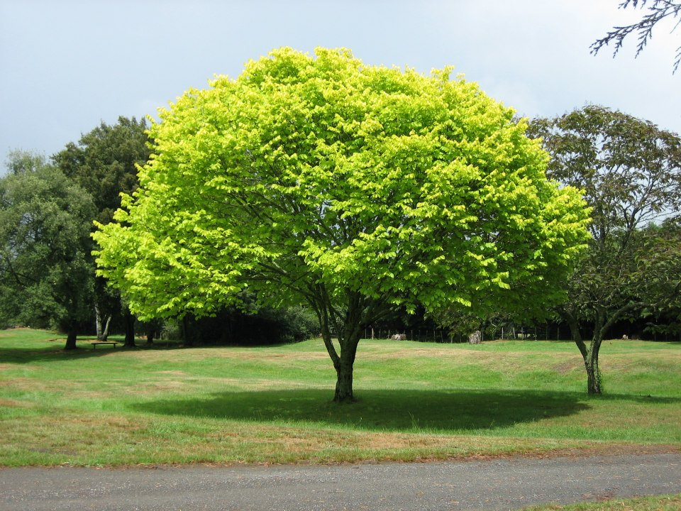 Image result for healthy tree