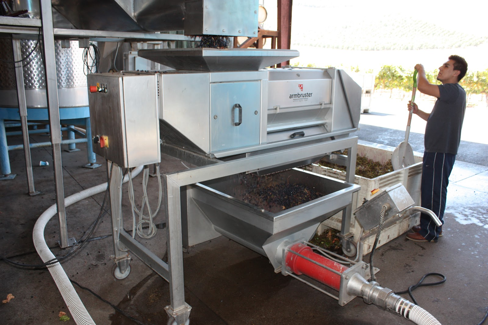 The crusher hard at work on the newly-picked Grenache