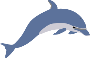 Another dolphin