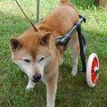 C:\Users\user\Desktop\Tomomi\2カット済み\中型犬L2輪\194.jpg