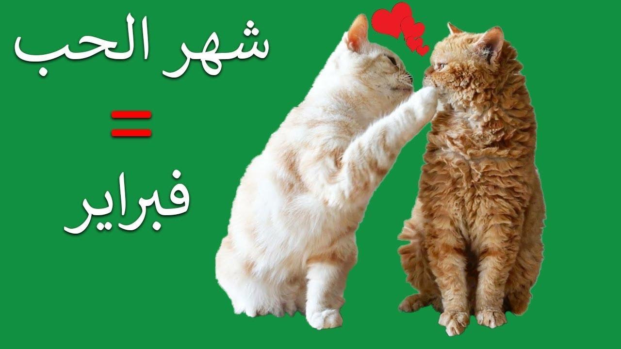 Image result for تزاوج القطط بفبراير