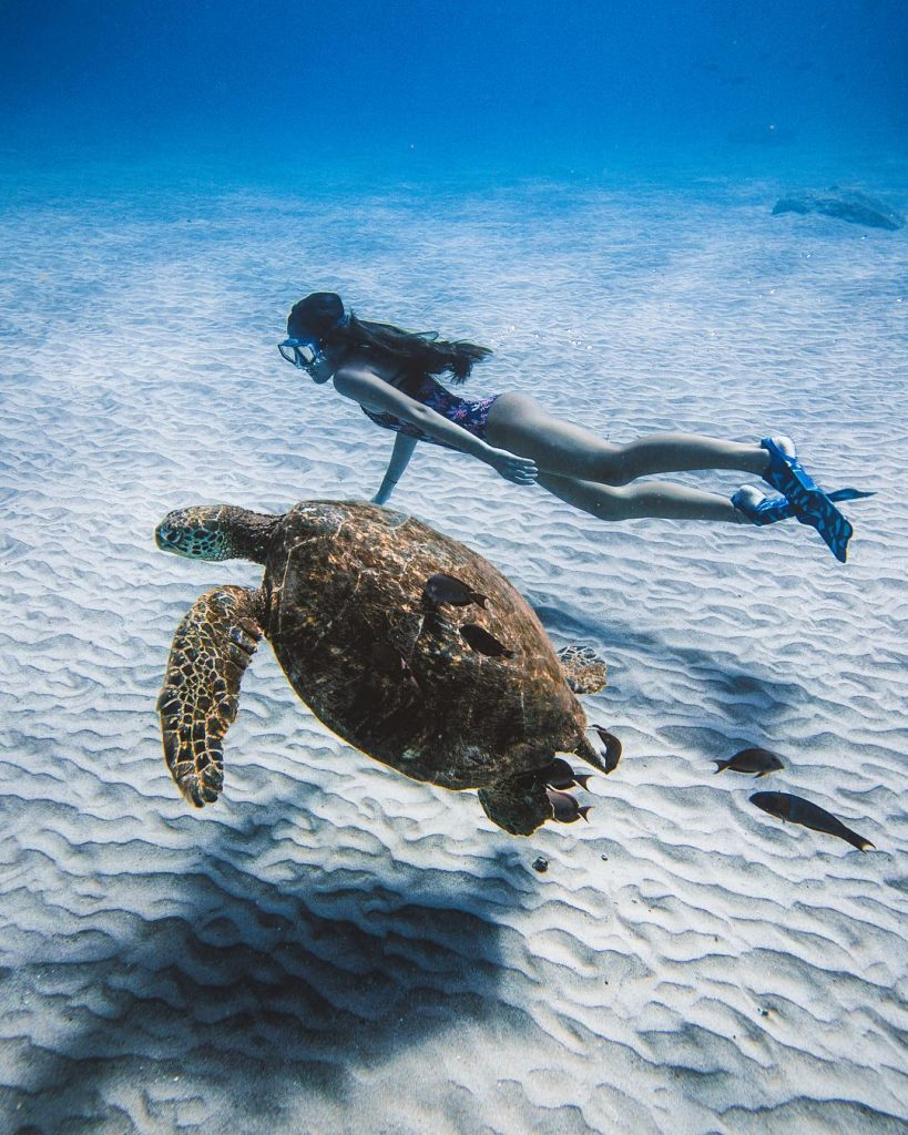 Turtle - best things to do in maui hawaii