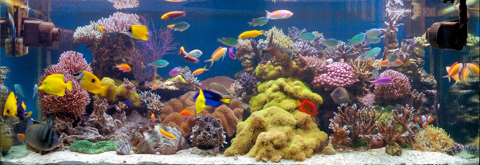 File:Reef Aquarium.jpg