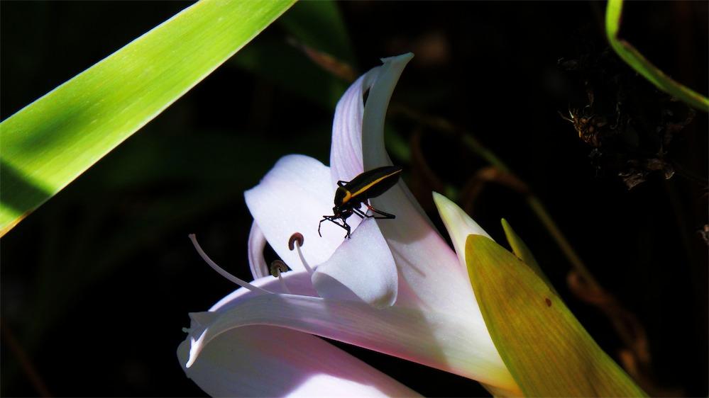 Beetle Banquet.jpg
