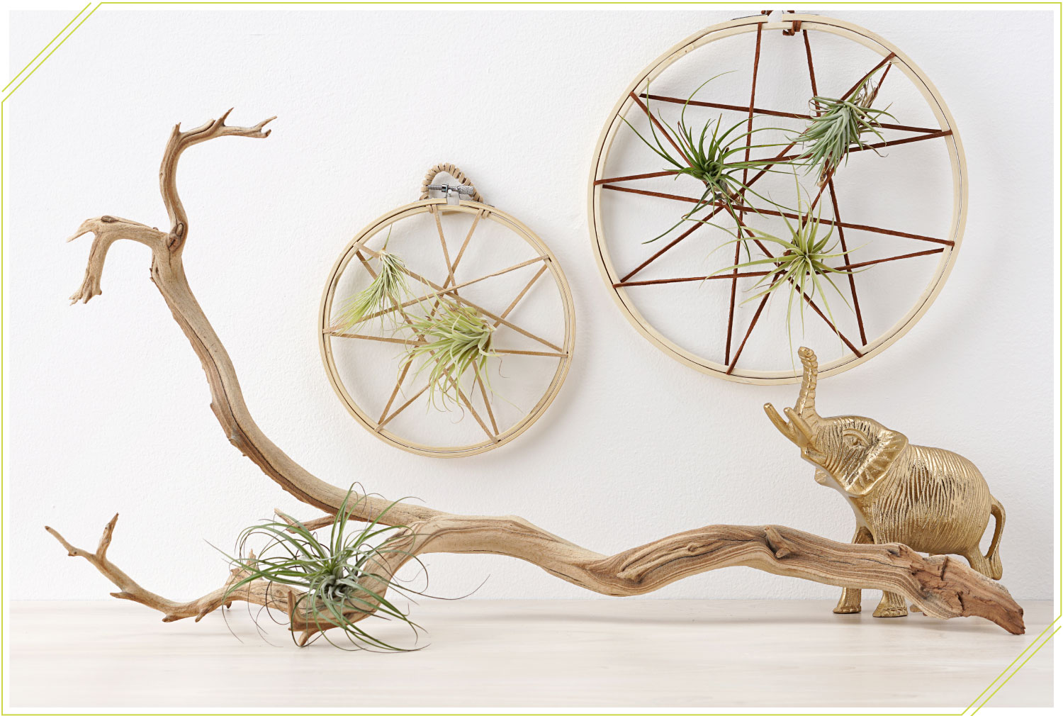 Bohemian Decor Idea: DIY Air Plant String Art. Bohemian decor diy. Bohemian decorating ideas for living room. Bohemian decor on a budget. Boho wall decor, bohemian style, decorating with air plants.