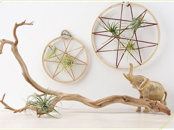 Bohemian Decor Idea: DIY Air Plant String Art