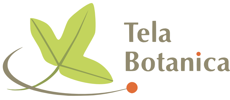 logo_tela_horiz_taupe_duoverts_orange.png