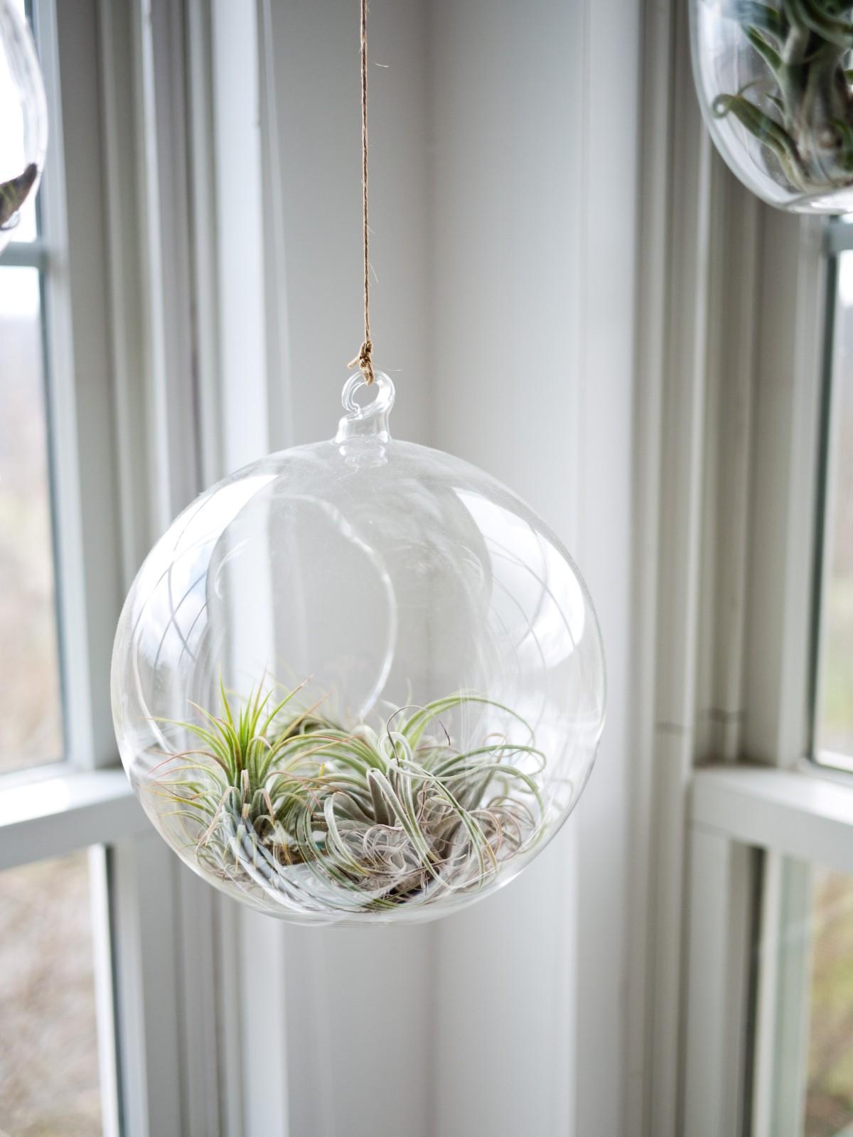 plant, string, round, window, glass, indoor, succulent, hanging, lighting, globe, interior design, publicdomain, light fixture