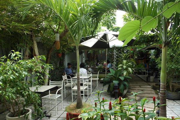 Trung Du Xanh coffee