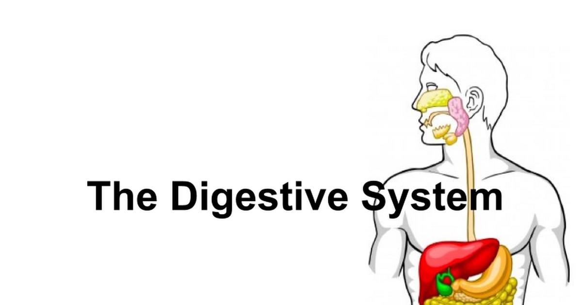 5. Digestive System - Google Slides