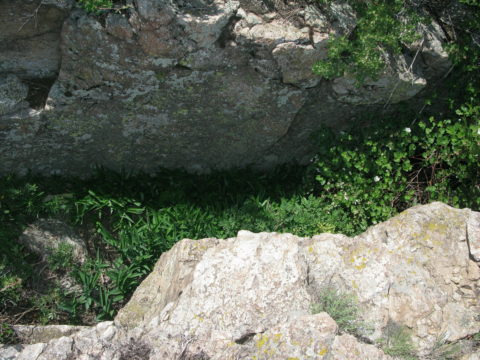 Microclimate in rock pit on Table Rock mesa