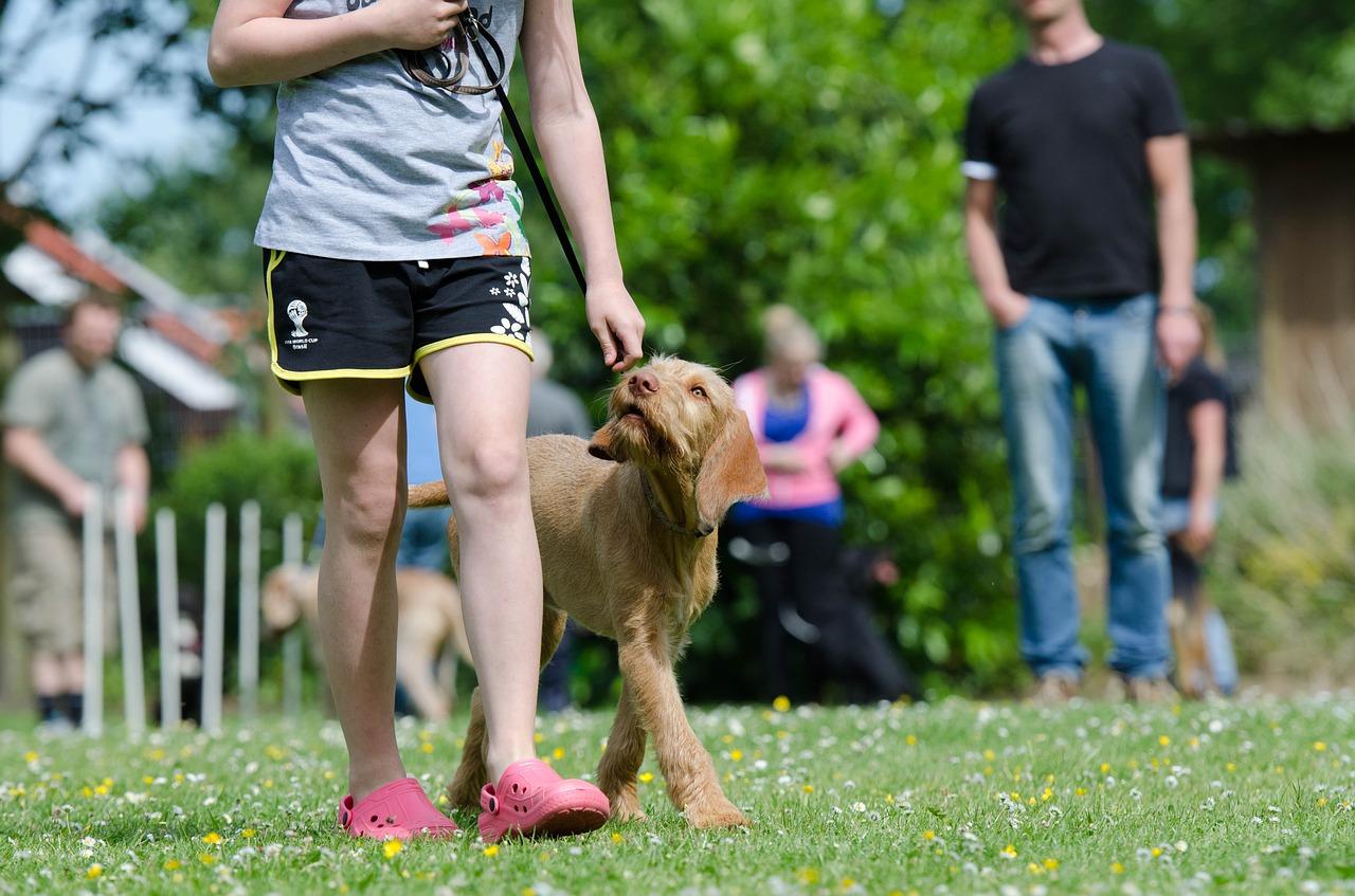 Man walking a dog after training