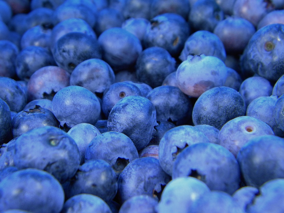 Free photo: Blueberries, Blueberry, Fruit, Food - Free Image on ...
