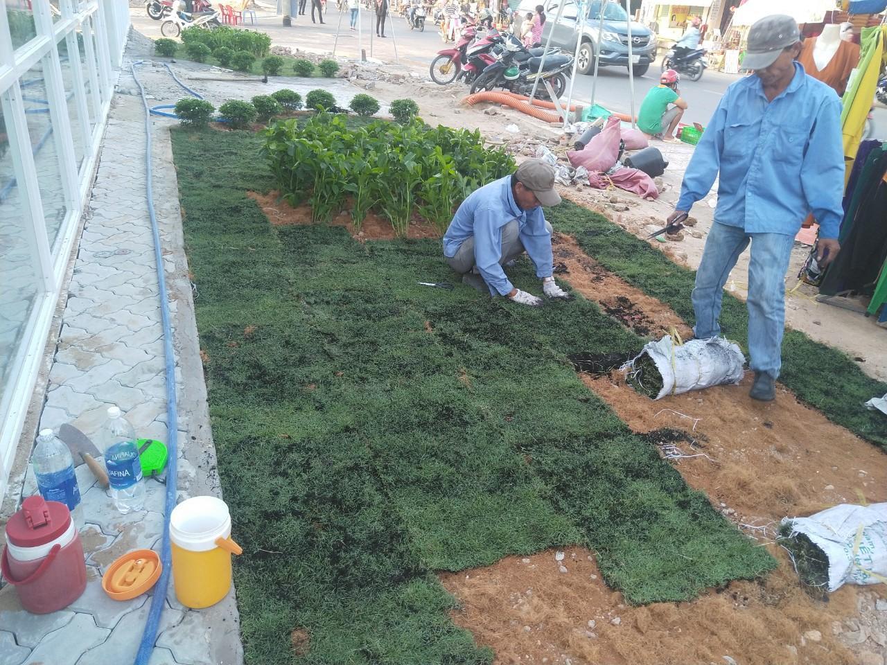 Nếu bạn có nhu cầu trồng cỏ hãy đến ngay với Cây Xanh Miền Nam