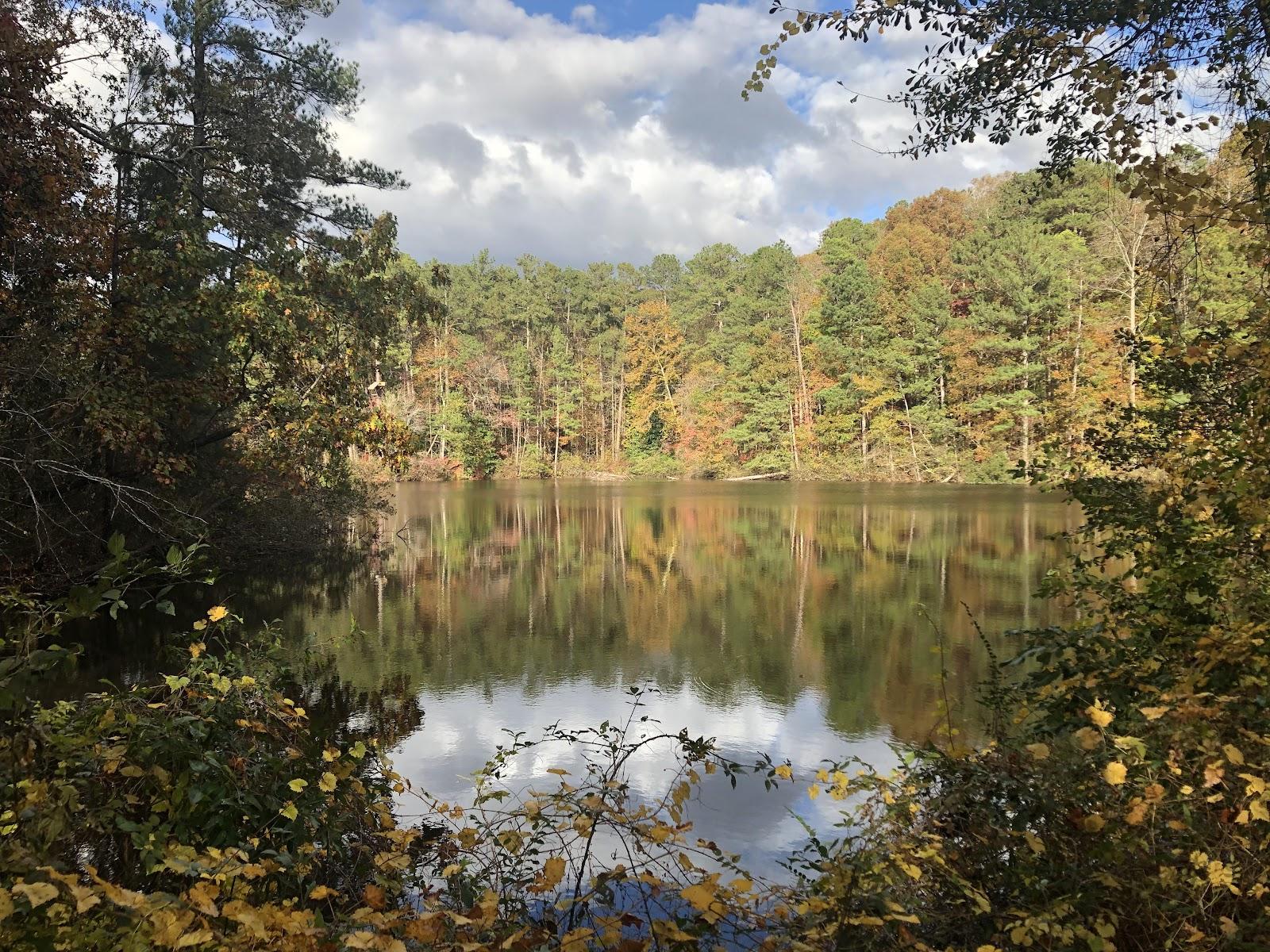 lake with foliage