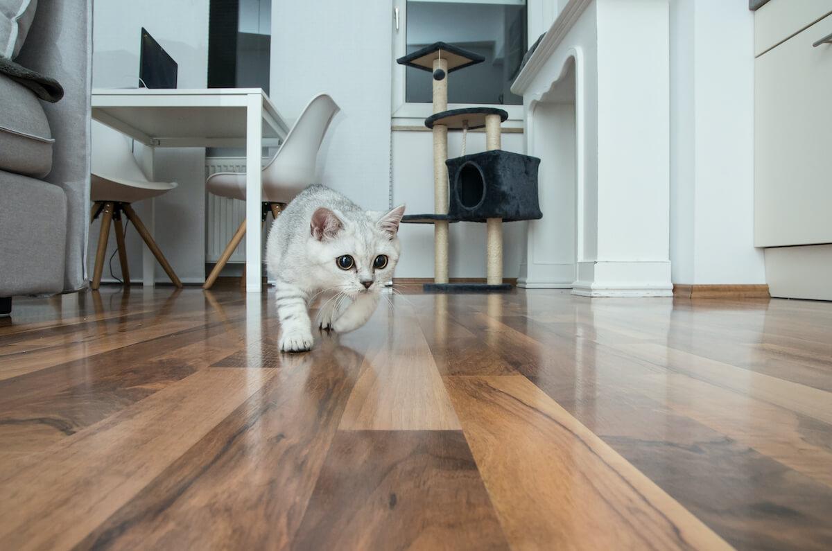 les chats anxieux ont tendance à se cacher