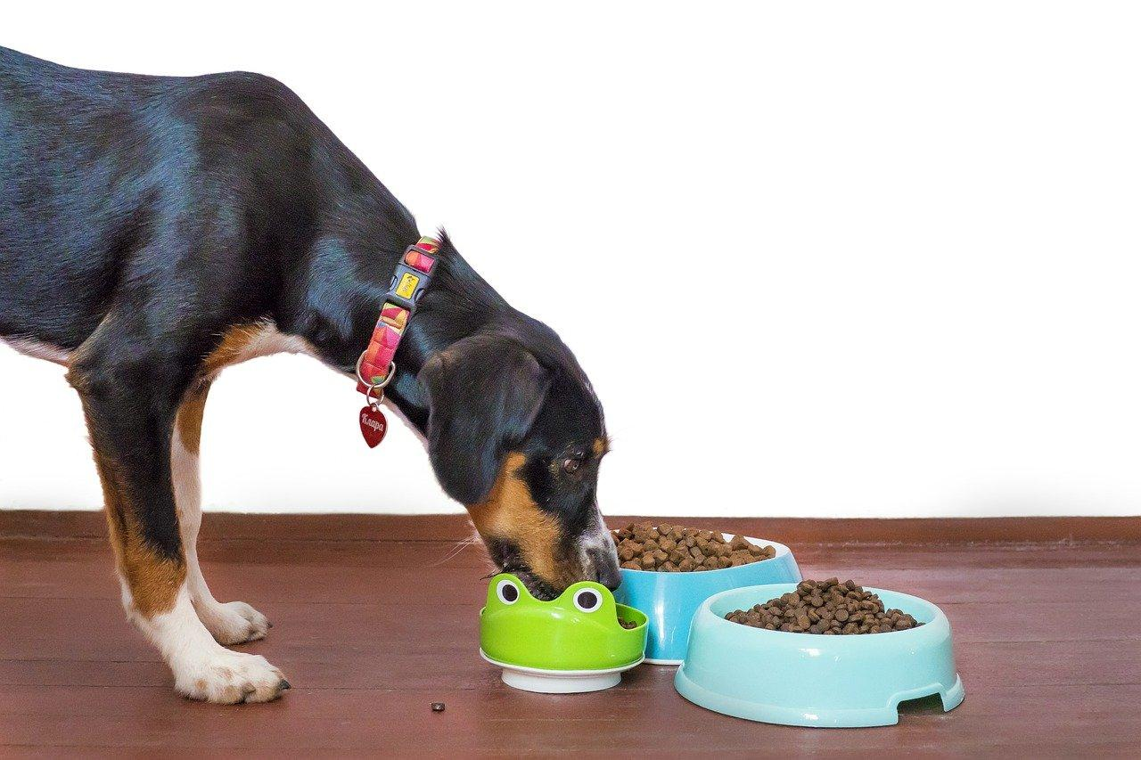 Taurine For Dogs