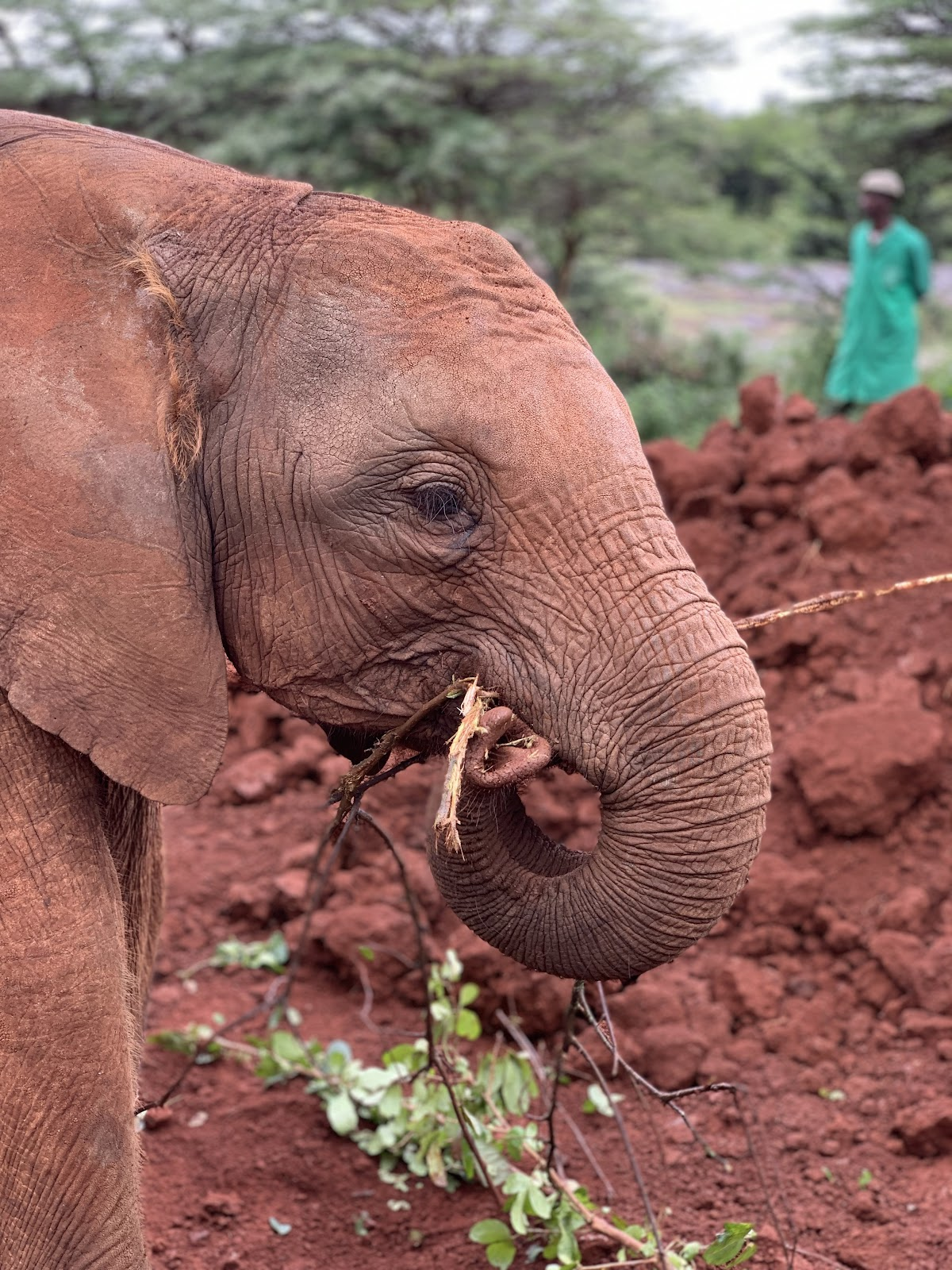 DSWT. Ultimate Nairobi City Guide - Part 2 Photo by Young Lee @nakslee