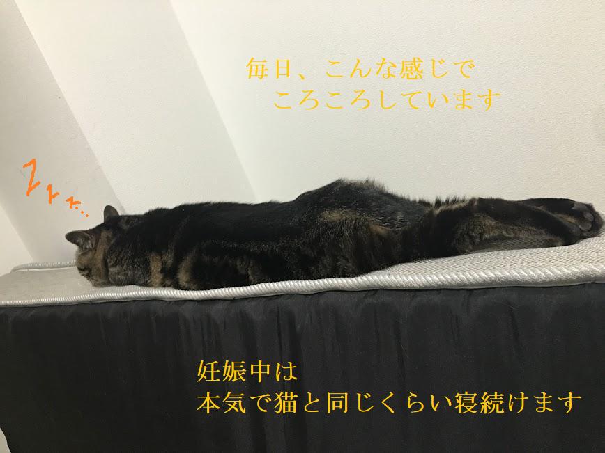 妊娠中に猫と暮らす時の注意点と、楽な体制で猫と遊べる方法とは