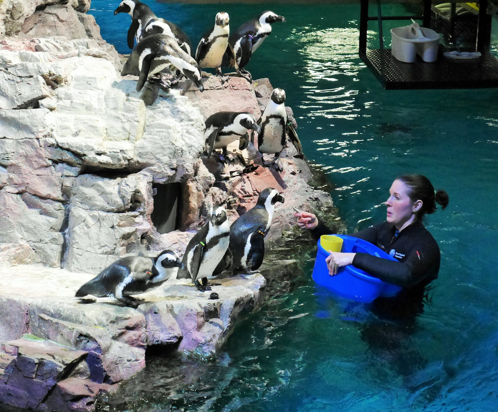 Visit the New England Aquarium