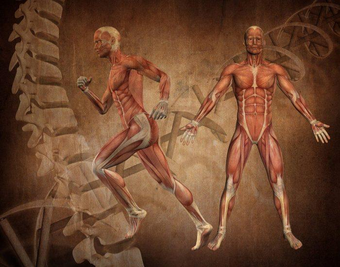 There are two men with no skin. You can see the muscles and ligaments This image would fall into the science category.