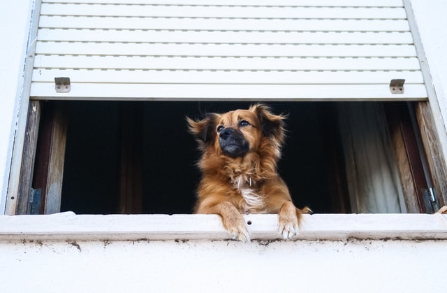 8 Things You Can Do to Help an Old Dog That is Suddenly Hyperactive! | give your dog something to do while you are away