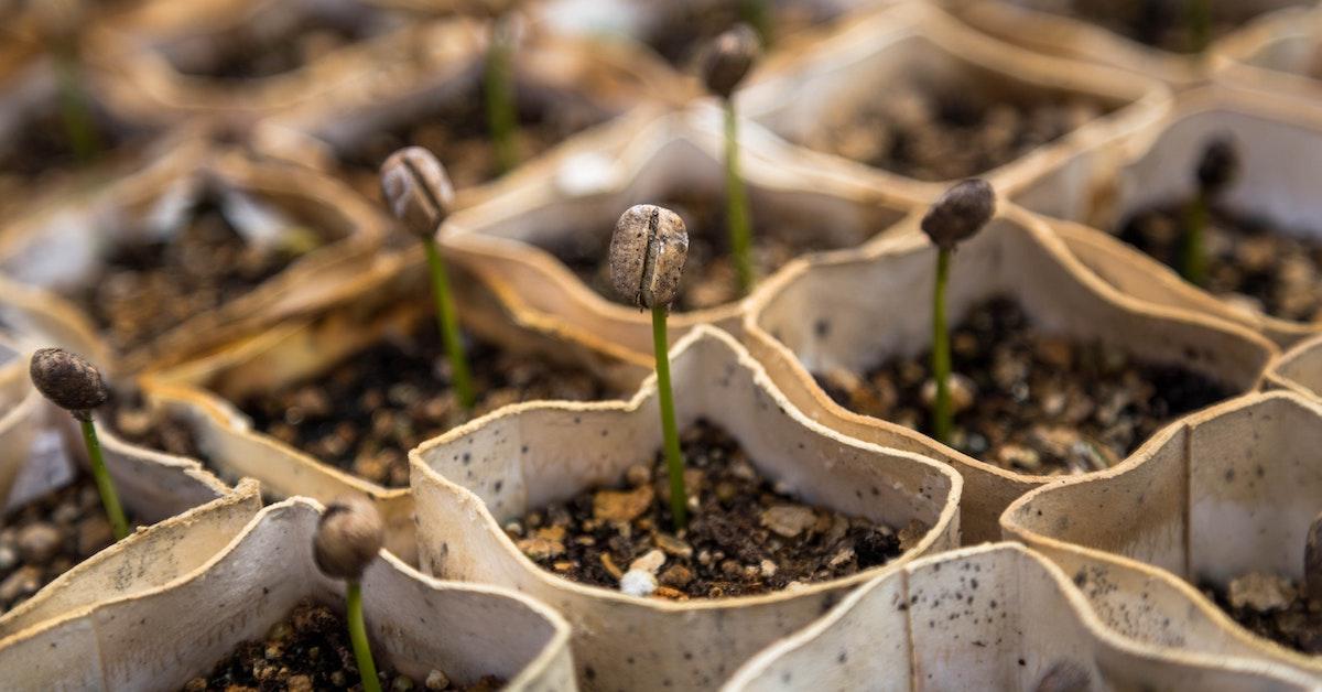coltivazione di sementi da orto