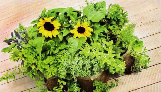Цветы в контейнерах, цветы в горшках