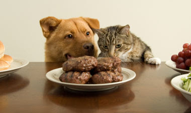 meat good for cats and dogs