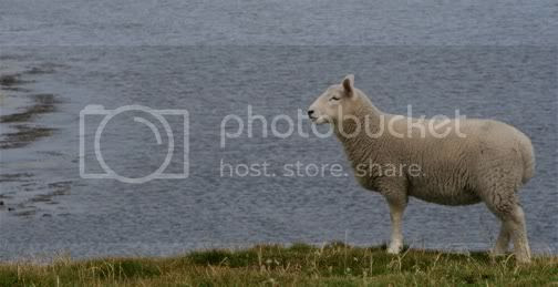 welcome to shetland