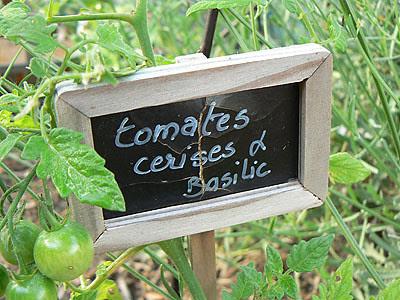 tomates cerises et basilic.jpg
