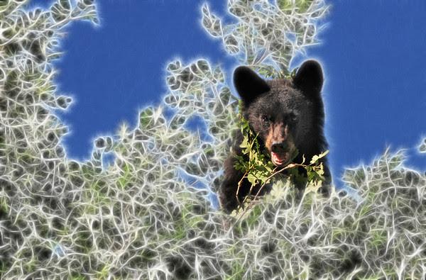 Fractal Bear