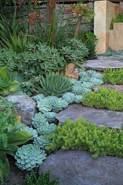 Succulent laden stone steps