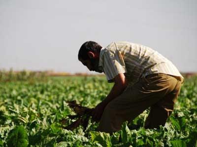 Un agricultor marroquí.