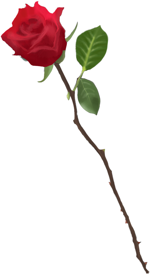 Long Stem Rose Drawing At Getdrawingscom Free For Personal Use