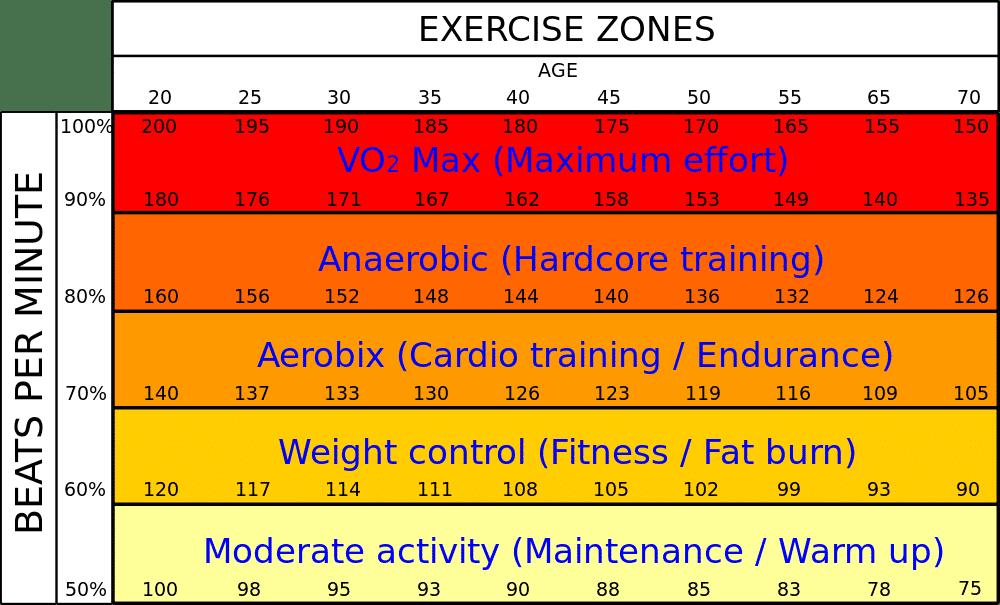 body fat percentage estimate calculator