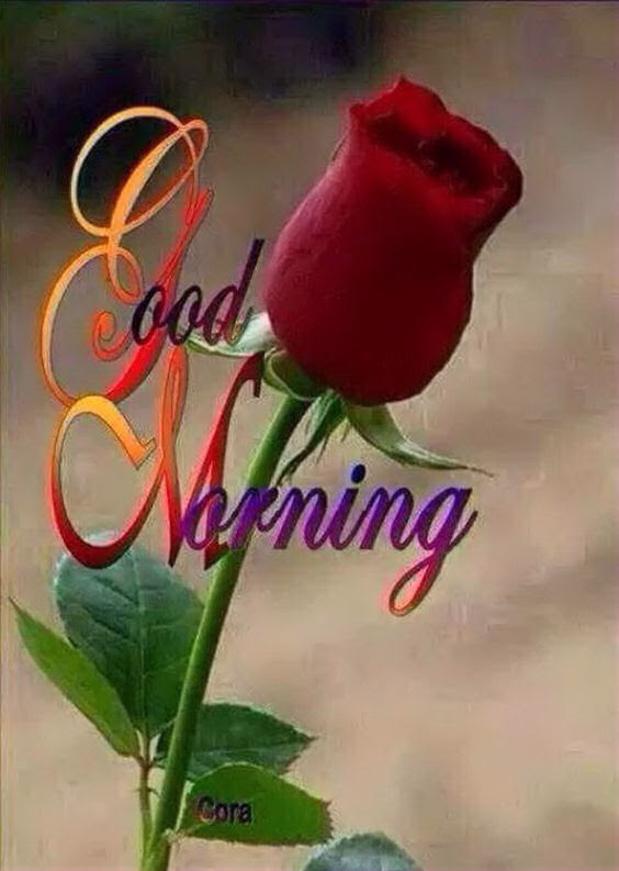 Beautiful Good Morning Rose Pictures Photos And Images For