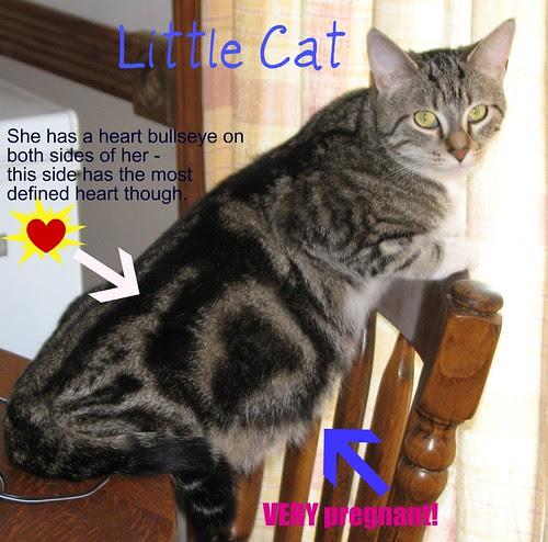 Little Cat - Preg 010