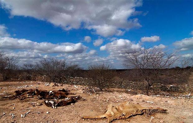 Seca no Rio Grande do Norte (Foto: Canindé Soares)