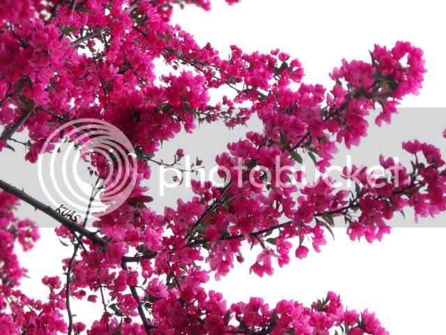 purple 09 flowers 2