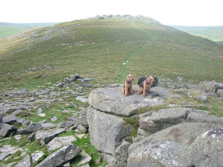 On a Tor on Dartmoor