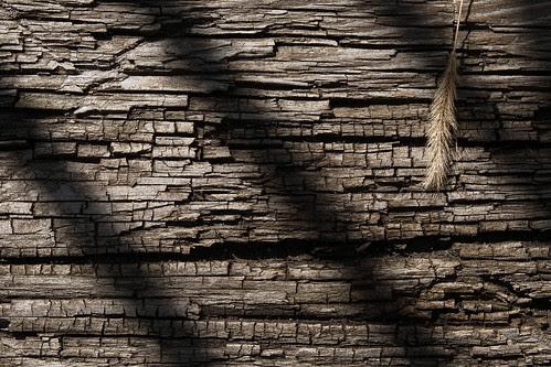 Crackled Wood